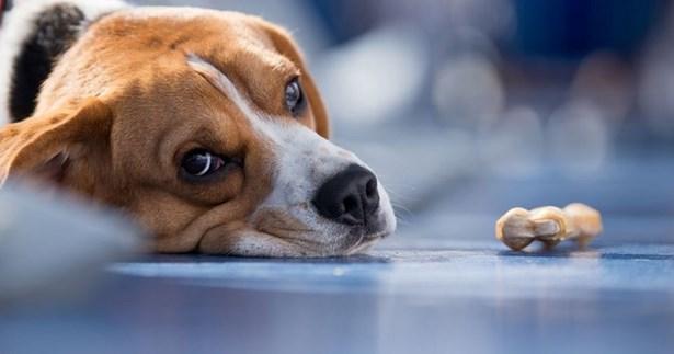 Στα χέρια της ΕΛ.ΑΣ. άνδρας που δηλητηρίασε με τροφή δεσποζόμενο σκύλο