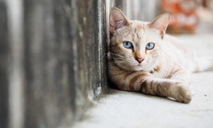 Η εφαρμογή που βοηθά τους φίλους της γάτας να καταλάβουν τι… λέει – Newsbeast