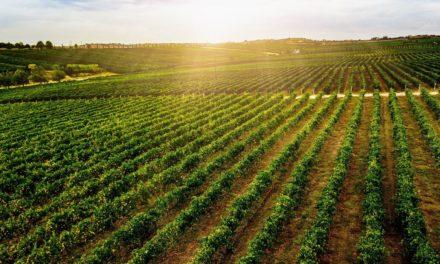 Αναγκαία και επείγουσα η στρατηγική «συναρμολόγηση» των αγροτικών πολιτικών