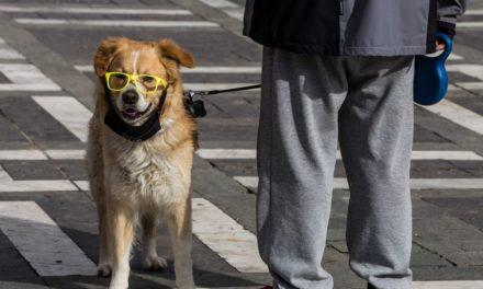 Το νομοσχέδιο για τα ζώα συντροφιάς και οι 10 άξονες του
