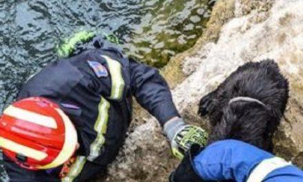 Κρήτη: Πυρεσβέστες διέσωσαν σκύλο απο ποτάμι