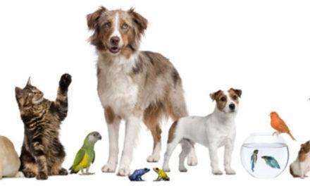 Σημαντικές αλλαγές στο θεσμικό πλαίσιο για τα ζώα συντροφιάς