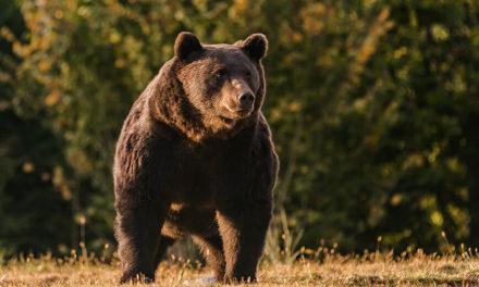 Πρίγκιπας του Λίχτενστάιν σκότωσε τον «βασιλιά» των αρκούδων στην ΕΕ