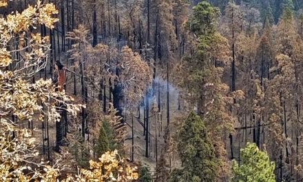 Γιγάντιο δέντρο σεκόγια καίγεται από το καλοκαίρι του 2020 στην Καλιφόρνια
