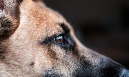 Συνελήφθη ο δράστης που είχε κρεμάσει σκύλο από γέφυρα στα Χανιά – Πρόστιμο 30.000 ευρώ
