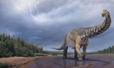 Δεινόσαυρος που ανακαλύφθηκε στην Αυστραλία είχε μήκος όσο ένα γήπεδο μπάσκετ
