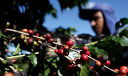 «Πικρός» καφές – Εκτίναξη των τιμών στο υψηλότερο επίπεδο της τελευταίας επταετίας